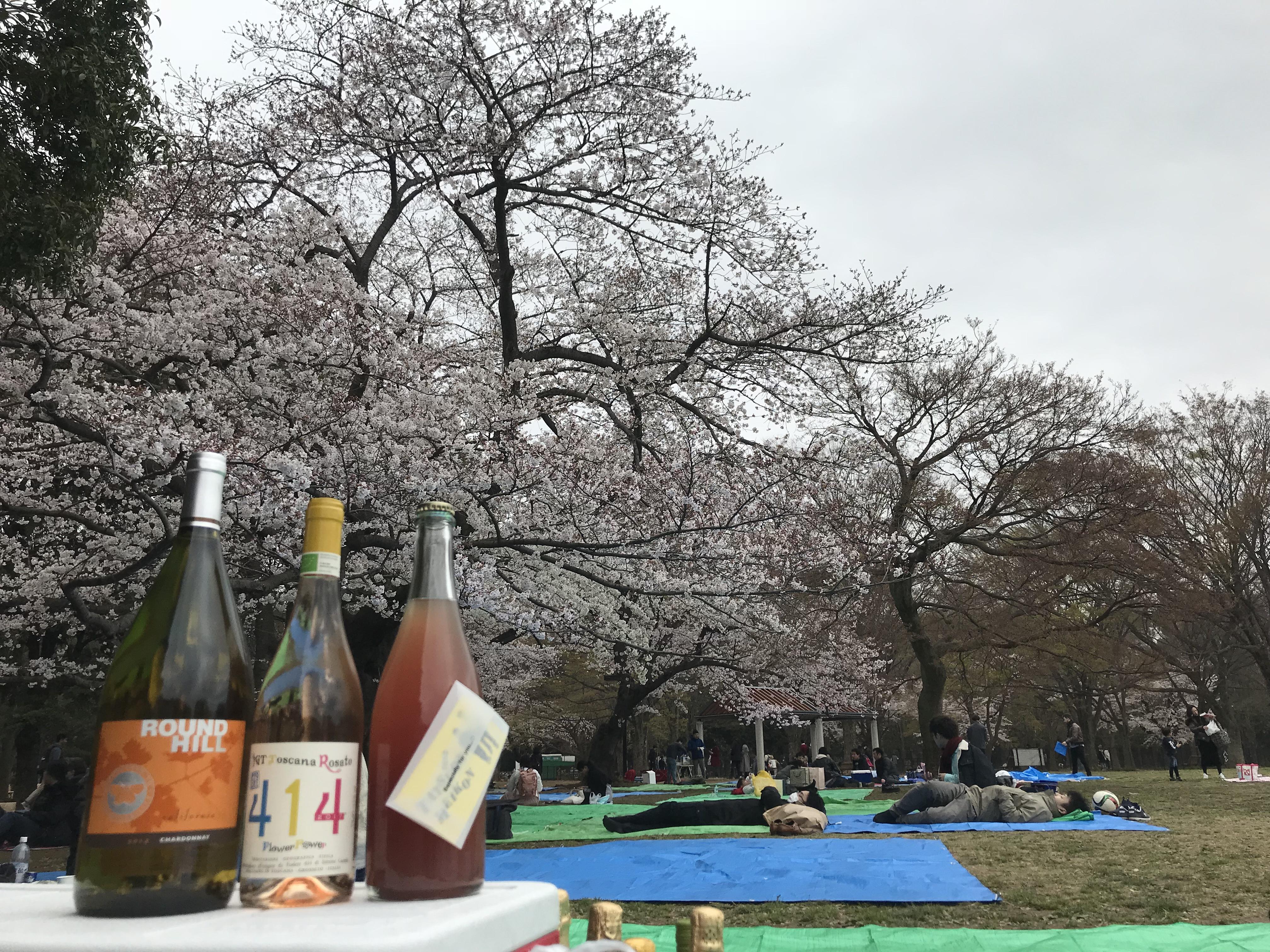 (終了)自然派ワイン会秋のピクニック@代々木公園